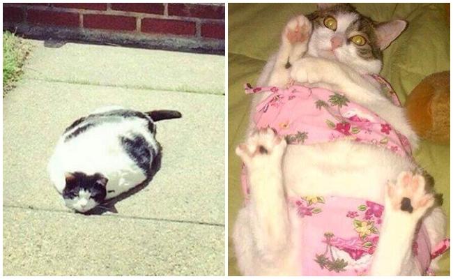 Yazdan En Az Senin Benim Kadar Nefret Eden 9 Usanmış Kedi