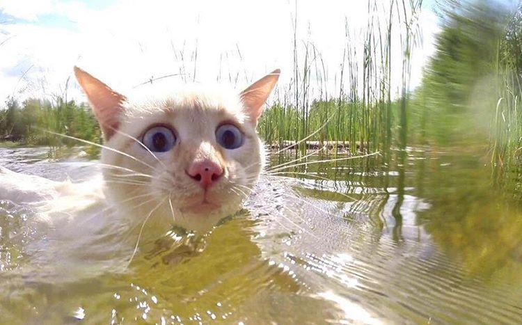 yazi-sevmeyen-kediler-patiliyo-4