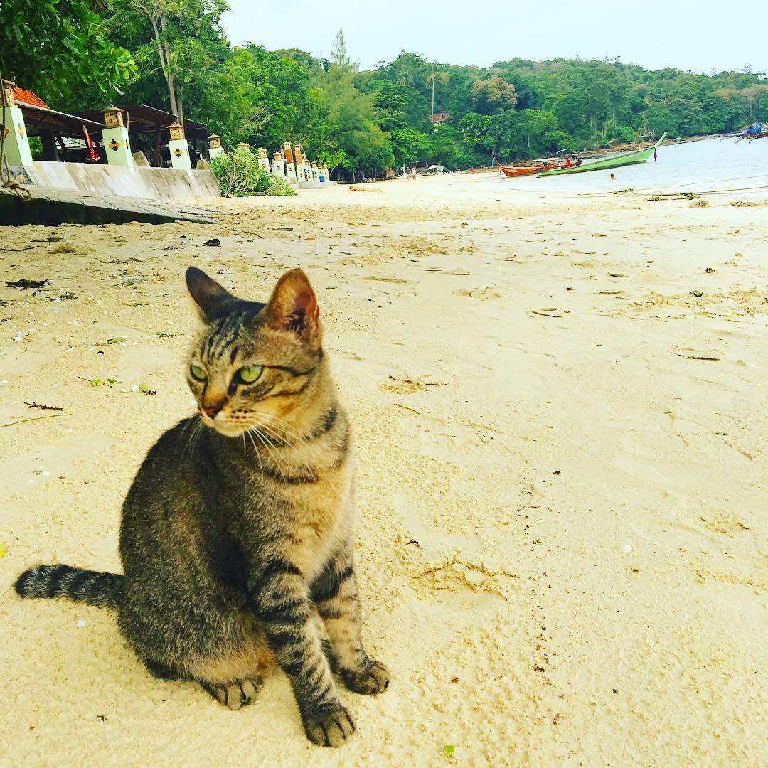yazi-sevmeyen-kediler-patiliyo-6