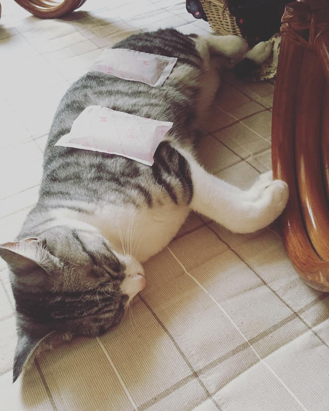 yazi-sevmeyen-kediler-patiliyo-7