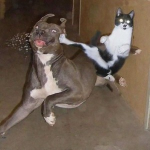 Dog-And-Cat-Funny-Karate-Picture