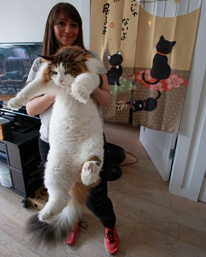 buyuk-kedi-cinsi-patiliyo-7