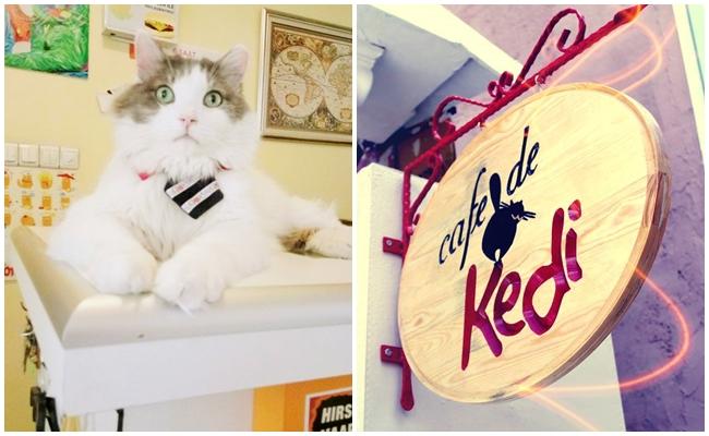 Bol Bol Çay İçiyoruz: Cafe de Kedi Kapanmasın, Kediler Üzülmesin, Cennet'ini Kaybetmesin
