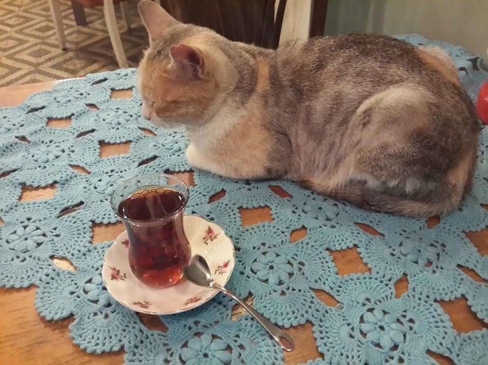 cafe de kedi kapanmasin