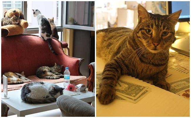 Kediseverler İçin Türkiye'de Bir Cennet: Cafe de Kedi!