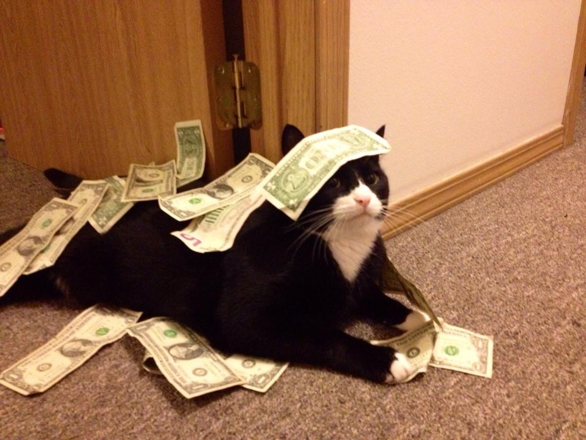 dort-kediyle-yasamak-patiliyo-11
