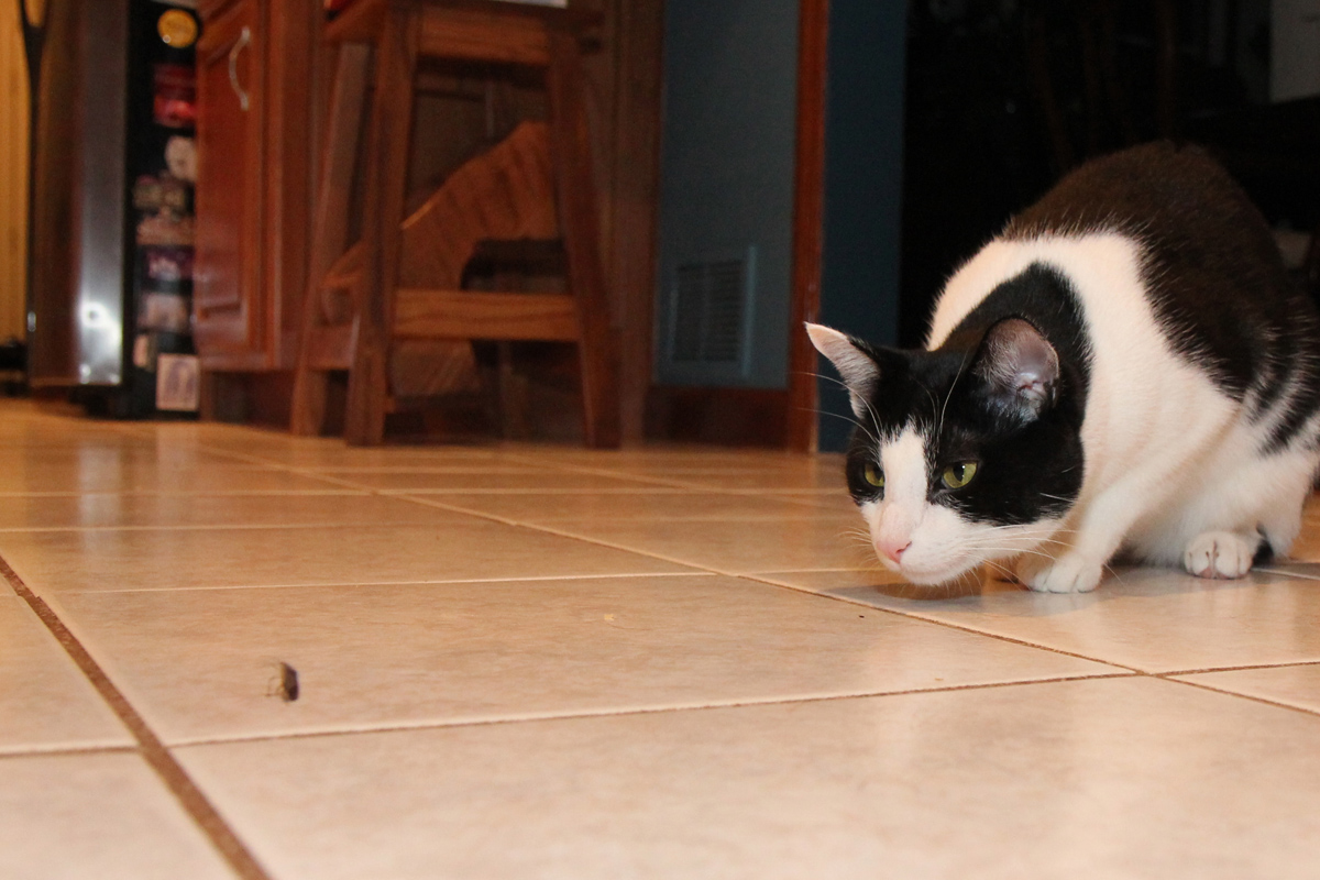 dort-kediyle-yasamak-patiliyo-14