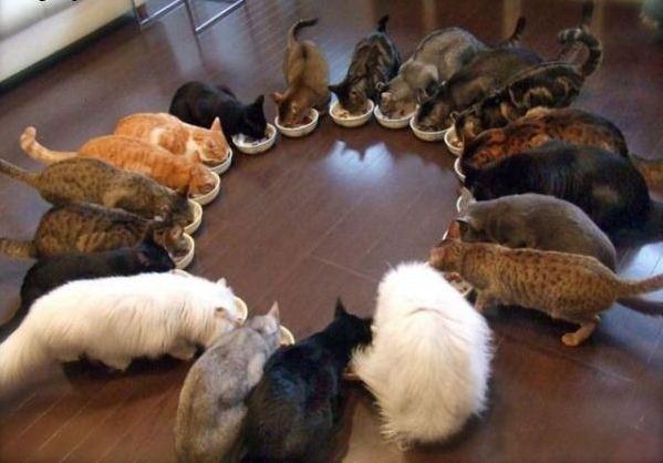 dort-kediyle-yasamak-patiliyo-2