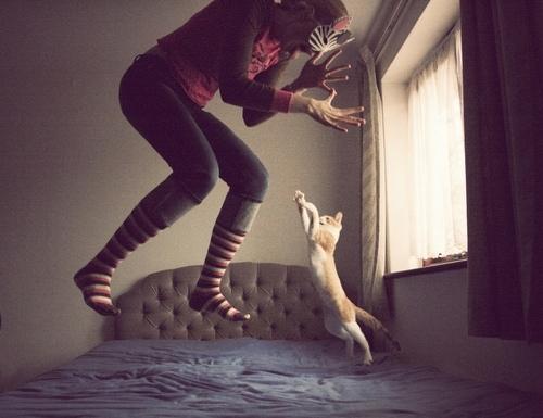 dort-kediyle-yasamak-patiliyo-4