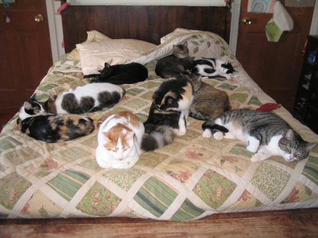 dort-kediyle-yasamak-patiliyo-5