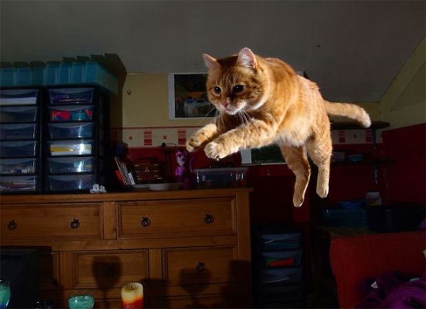 dort-kediyle-yasamak-patiliyo-7