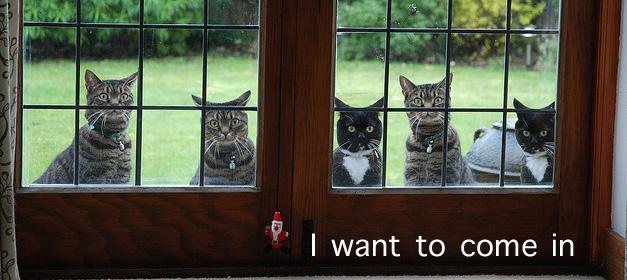 dort-kediyle-yasamak-patiliyo-9