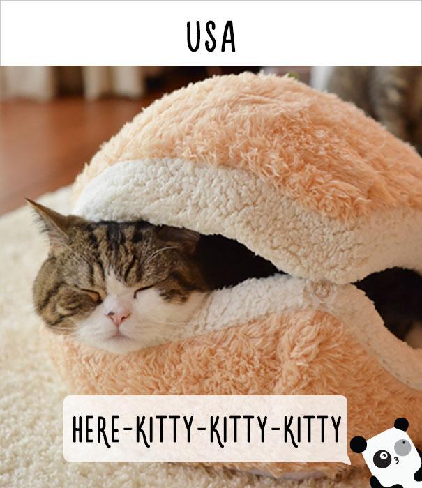 dunyadaki-diger-insanlar-kedilere-nasil-seslenir-patiliyo-12