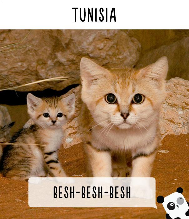 dunyadaki-diger-insanlar-kedilere-nasil-seslenir-patiliyo-13