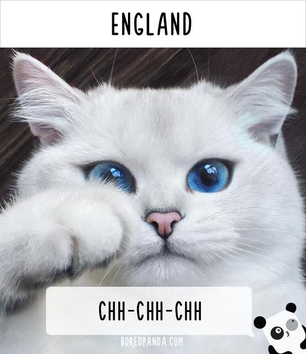 dunyadaki-diger-insanlar-kedilere-nasil-seslenir-patiliyo-15