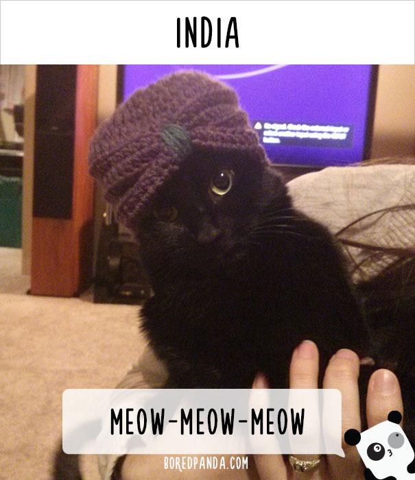 dunyadaki-diger-insanlar-kedilere-nasil-seslenir-patiliyo-17