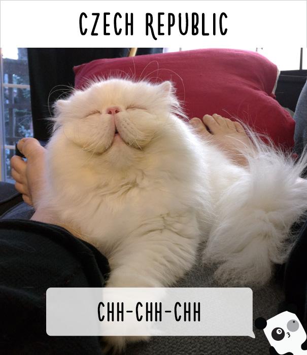 dunyadaki-diger-insanlar-kedilere-nasil-seslenir-patiliyo-21