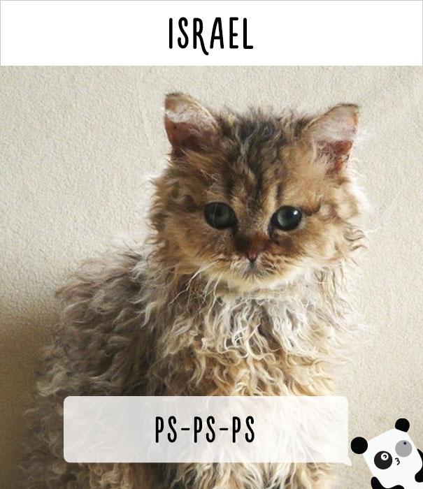 dunyadaki-diger-insanlar-kedilere-nasil-seslenir-patiliyo-24