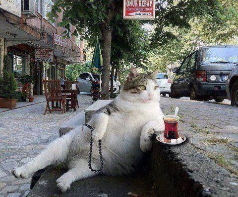 dunyadaki-diger-insanlar-kedilere-nasil-seslenir-patiliyo-27