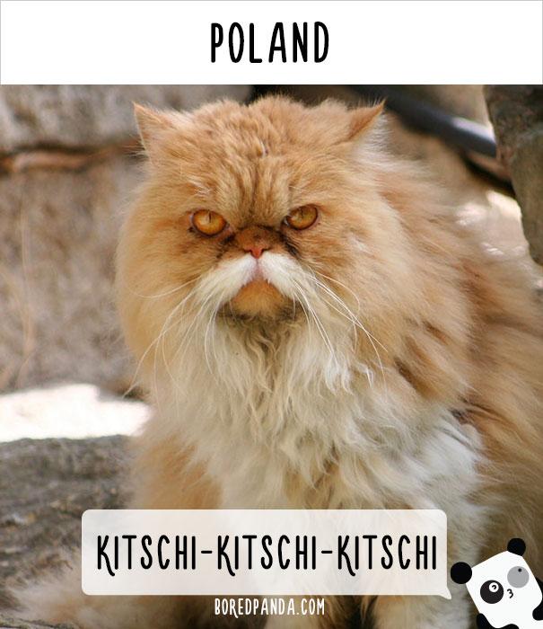 dunyadaki-diger-insanlar-kedilere-nasil-seslenir-patiliyo-5
