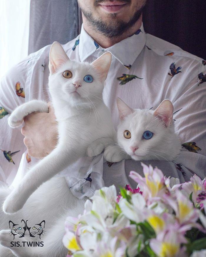 dunyanin en guzel kedileri