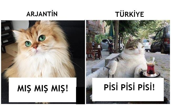 Gel Pisi Pisi: Dünyadaki Diğer İnsanlar Kedilere Nasıl Seslenir?