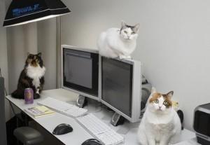gatti-lavoro