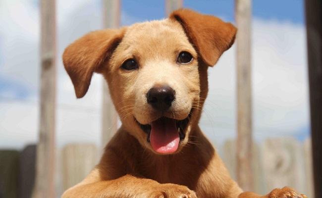 İlk Defa Köpek Sahipleneceklerin Mutlaka Bilmesi Gereken 7 Önemli Bilgi