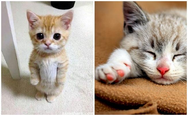Yeni Kedi Sahiplenen İnsanlarda Gördüğümüz 13 Davranış