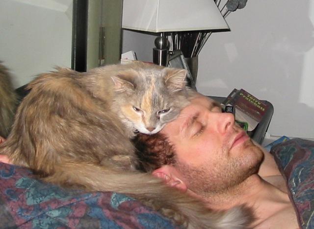 kedi-ile-uyumak-patiliyo-3
