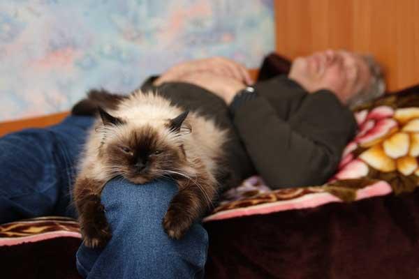 kedi-ile-uyumak-patiliyo-4