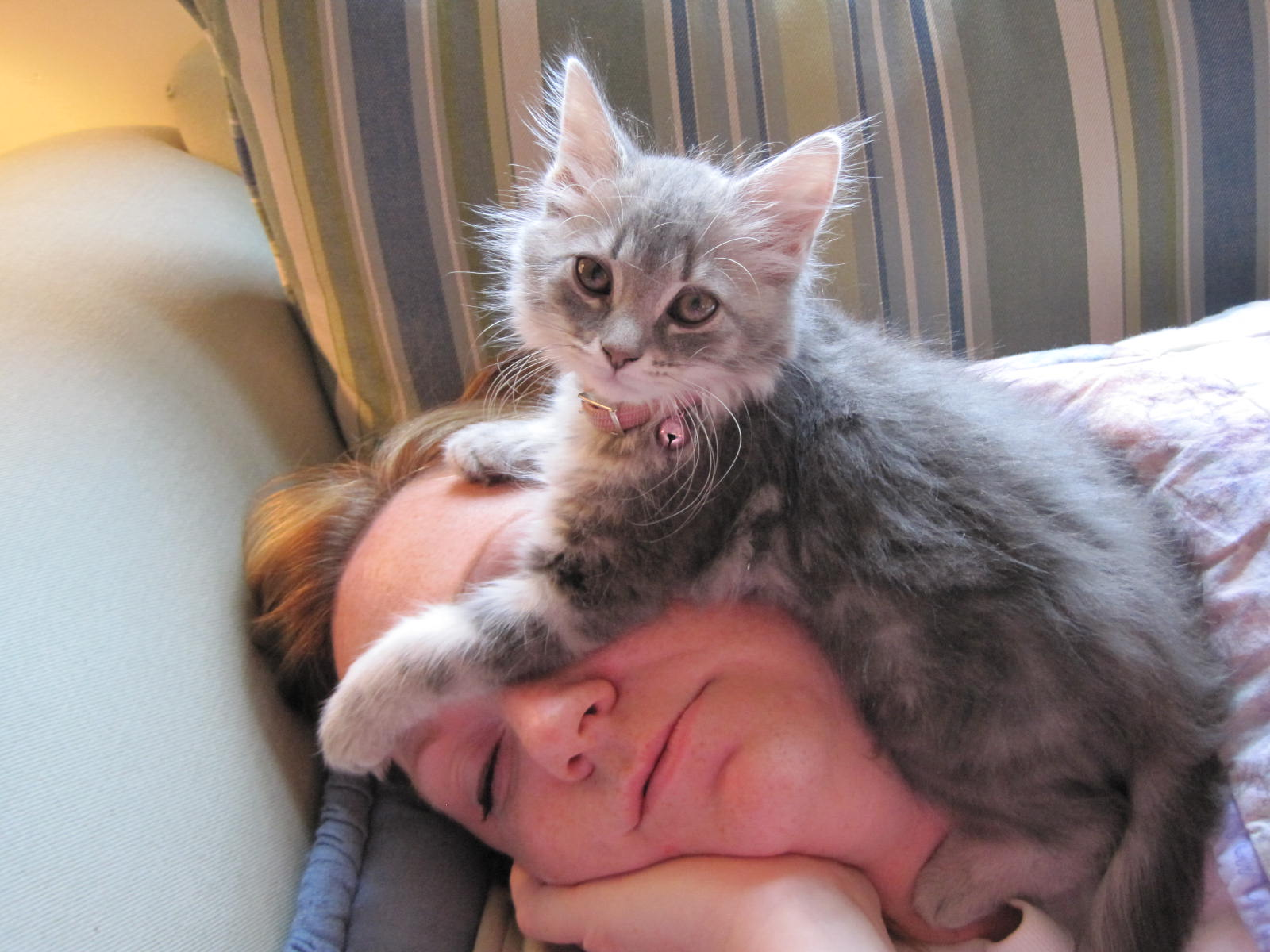 kedi-ile-uyumak-patiliyo-5