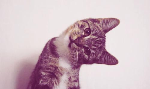 kedi-insanlari-ve-kopek-insanlari-patiliyo-3