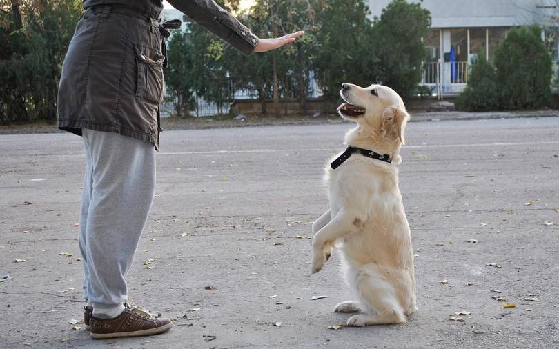 kedi-insanlari-ve-kopek-insanlari-patiliyo-5