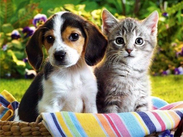 kedi-insanlari-ve-kopek-insanlari-patiliyo-6