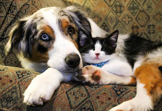 kedi-insanlari-ve-kopek-insanlari-patiliyo-7