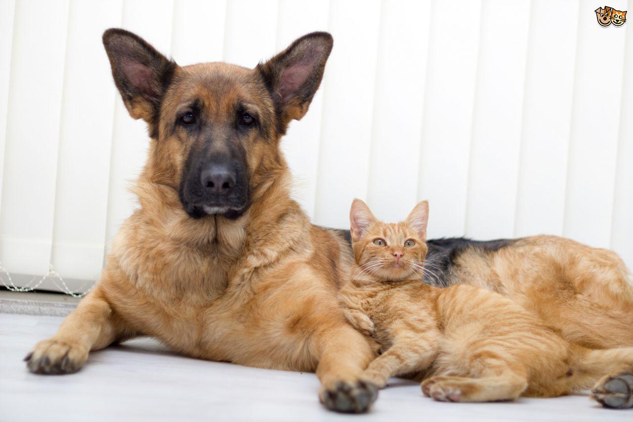 kedi-insanlari-ve-kopek-insanlari-patiliyo-8