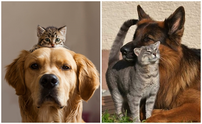 Kedi ve Köpek Bir Arada Olmaz Diyenlere 11 Bol Patili Olur Cevabı