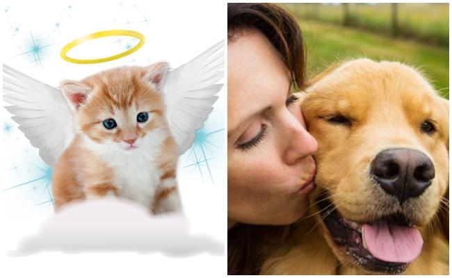 Kedisini veya Köpeğini Kaybeden Hayvanseverlerin Geçirdiği 16 Hüzünlü Evre