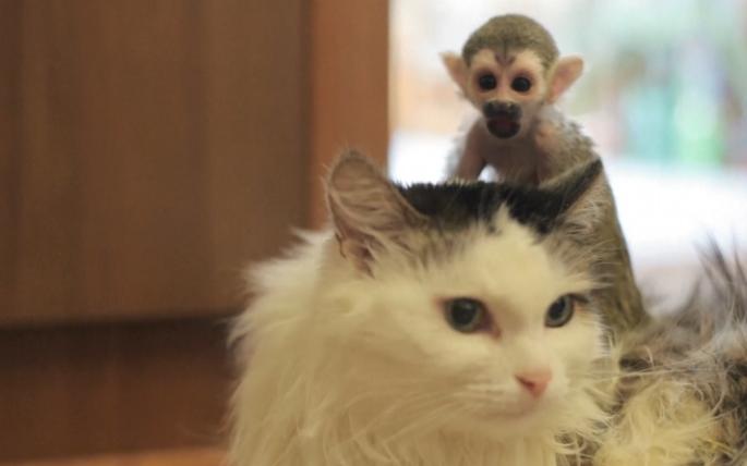 kedi-maymun-patiliyo-4