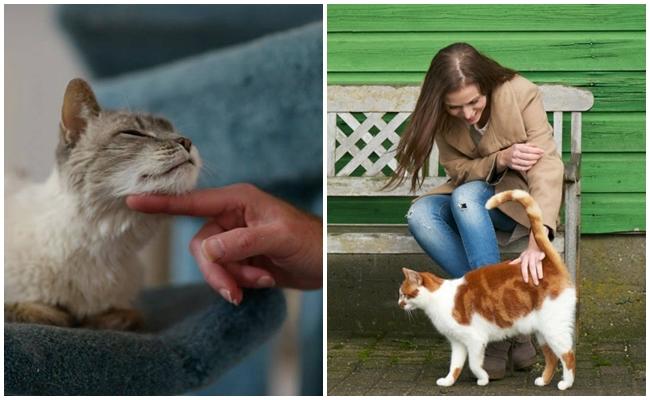"""Kedi Nasıl Sevilir: Kedinizin Size """"Biraz Daha Sev"""" Diye Miyavlayacak"""