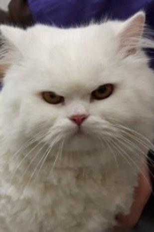kedi-tuyu-kesmek-patiliyo-2