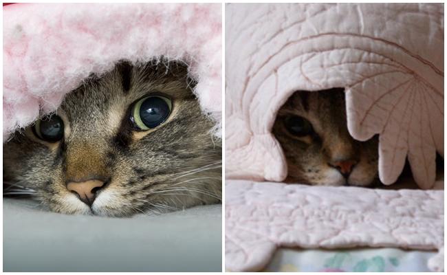 Kedilerin Bir Saklanma Uzmanı Olmalarına Yol Açan 5 Etken