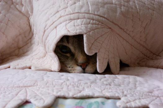 kediler-neden-saklanir-patiliyo-1
