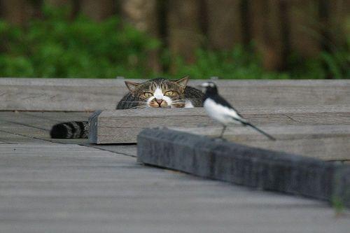 kediler-neden-saklanir-patiliyo-3
