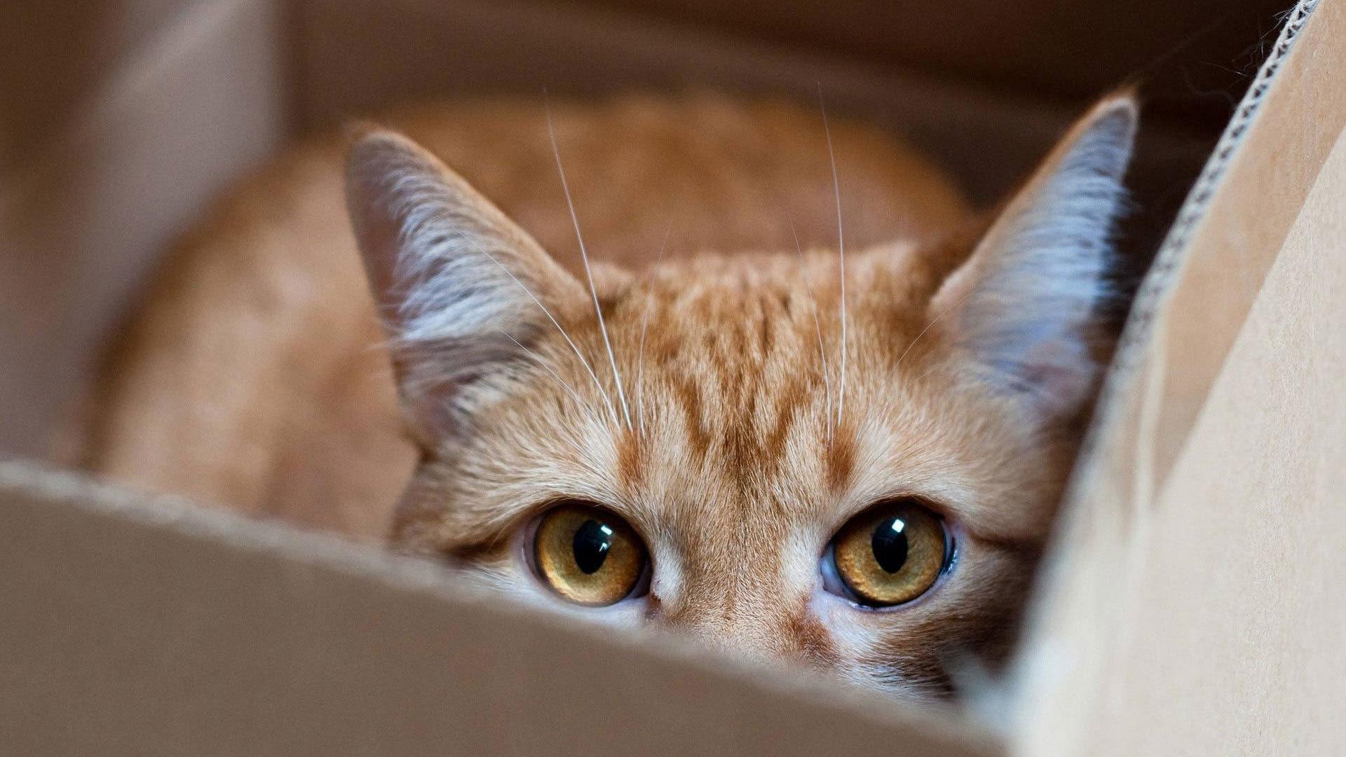 kediler-neden-saklanir-patiliyo-4