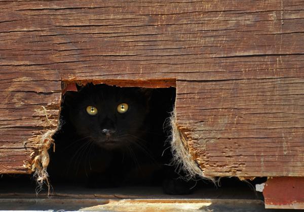 kediler neden saklanir