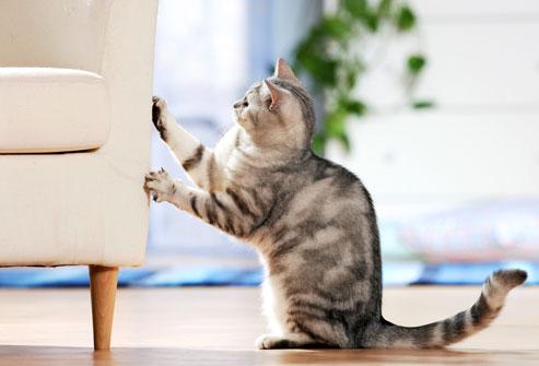 kedilerin koku duyulari