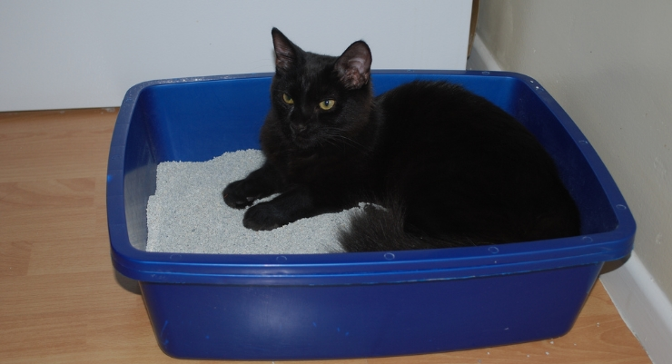 kedilerin-koku-duyulari-patiliyo-2