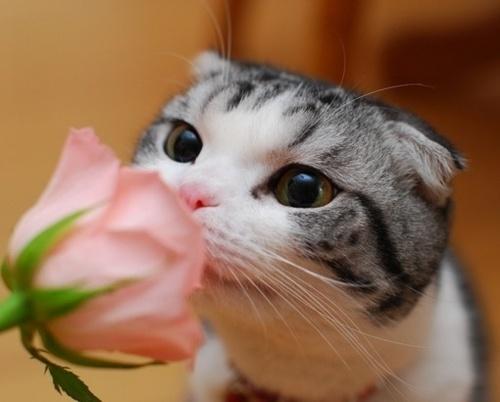 kedilerin-koku-duyulari-patiliyo-3